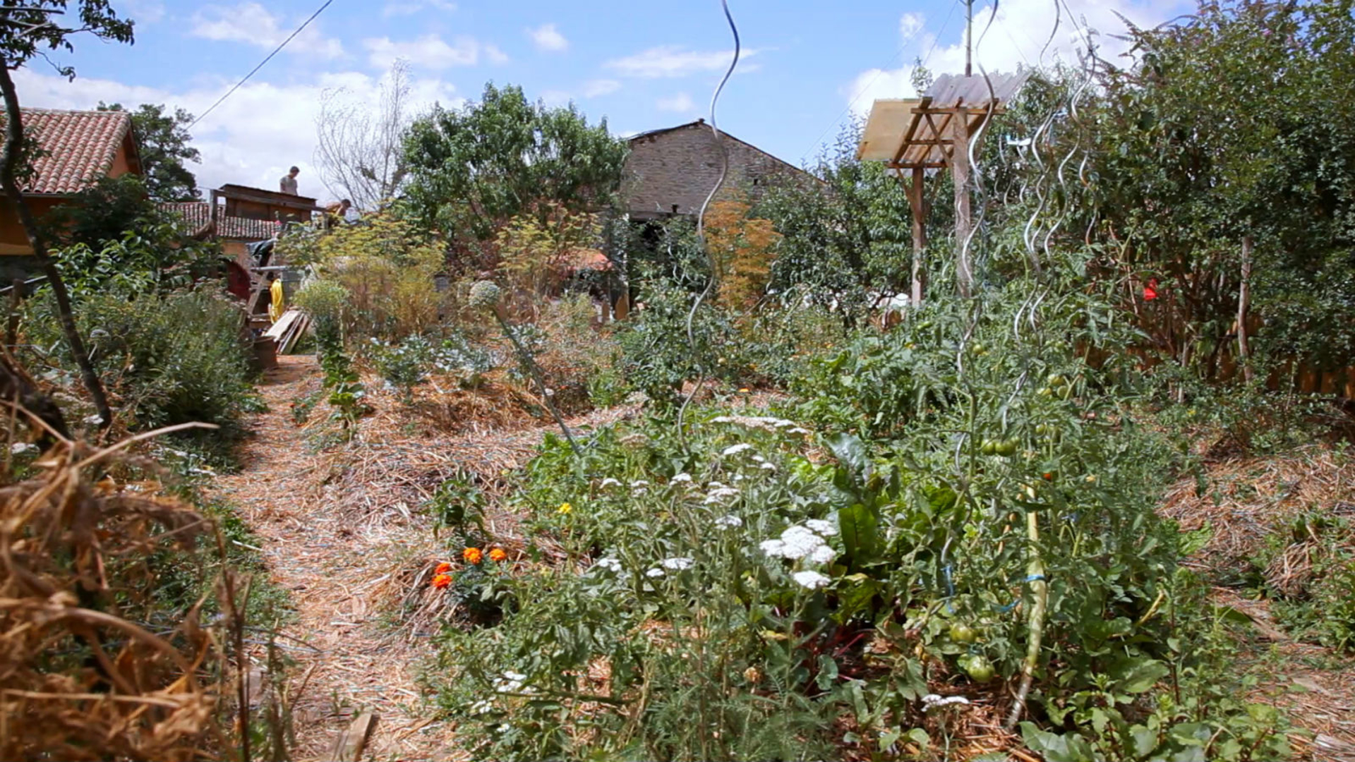 The Rise of Permaculture